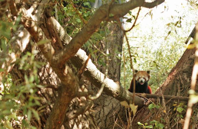 zoo bratislava tip na vylet cestovani s detmi